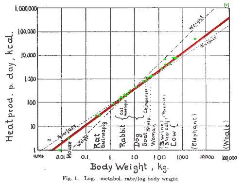 log-log plot